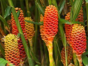 Les Fleurs Exotiques Des Iles Tropicales Qui Bordent Les Plages
