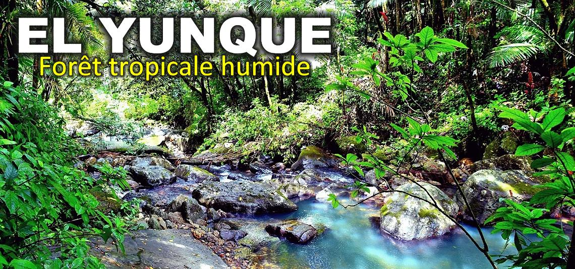 El Yunque, forêt tropicale humide à Porto Rico