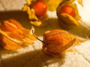 Physalis - fruit exotique
