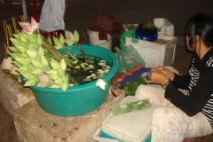 Lotus du Cambodge