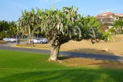 Cuba, Varadero, Golf