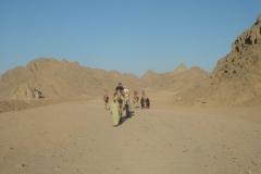 Hurghada, Egypte, désert, dromadaire