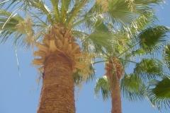Hurghada, Egypte, palmier