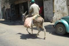 Egypte, Le Caire, ane
