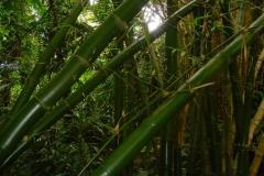 Ile Maurice, Crocodile Vanilla Park, bambou