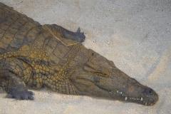 Ile Maurice, Crocodile Vanilla Park, Crocodile