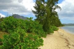Ile Maurice, île aux bénitiers, plage