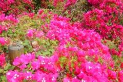 Ile Maurice, fleur