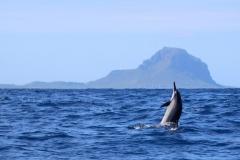 Ile Maurice, dauphins de la Baie de Tamarin