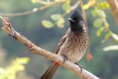 Ajanta, Inde, oiseau