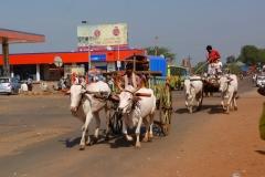 Badami, Inde, buffle
