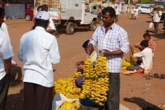 Badami, Inde, fleur