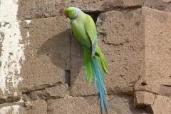 Bijapur, Inde, oiseau