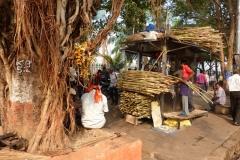 Bombay, Mumbai, Inde, canne à sucre