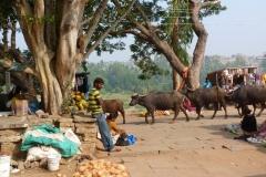 Hampi, Inde, homme, buffle