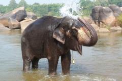 Hampi, Inde, éléphant