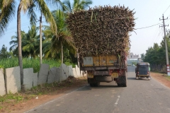 Hampi, Inde, canne à sucre