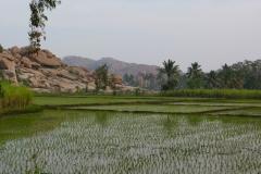 Hampi, Inde, rizière