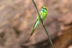 Pattadakal Aihole, Inde, oiseau