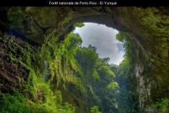 Forêt nationale, El Yunque, Porto Rico