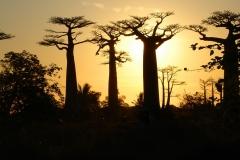 Madagascar, baobab, coucher de soleil