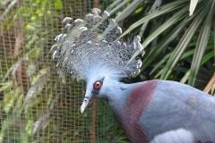 Malaisie, oiseau