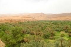 Maroc, Grand sud, palmeraie