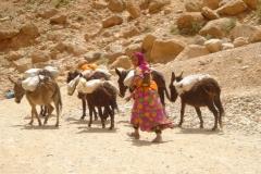 Maroc, Grand sud, bergère, ânes