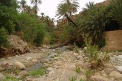 Maroc, Grand sud, palmeraie, oasis