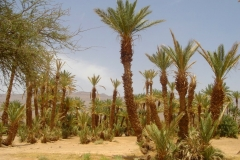 Maroc, Grand sud, désert, Atlas;, anti-Atlas