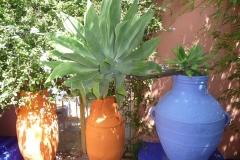 Maroc, Marrakech, jardin Majorelle