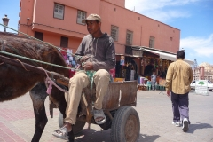 Maroc, Marrakech, âne