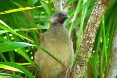 Mexique, oiseau