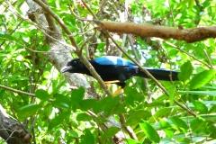 Mexique, Yucatan, Riviera Maya, Playa Del Carmen, oiseau