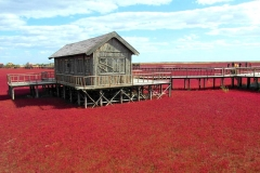 Plage rouge écarlate, Panjin, Chine, roseau rouge