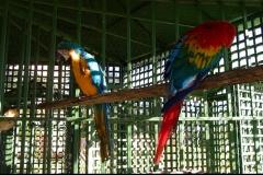 Ara, perroquet, oiseau, Las Galeras, République Dominicaine, Caraïbes