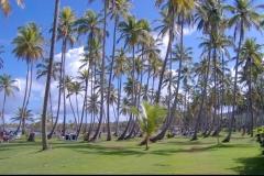 cocotier, plage, Las Galeras, République Dominicaine, Caraïbes