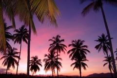 coucher de soleil, palmier, Las Galeras, République Dominicaine, Caraïbes