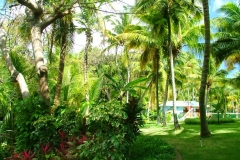 jardin, Punta Cana, République Dominicaine, Caraïbes