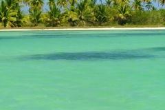 plage, Isla Saona, République Dominicaine, Caraïbes