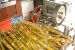 canne à sucre, Saint Martin