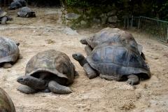 Ile des Seychelles tortues