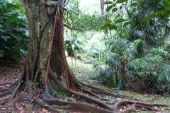 Sri Lanka arbre