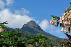 Sri Lanka montagne