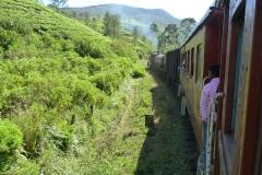 Sri Lanka, train et champs de théiers