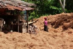 Sri Lanka bourre de cocos