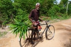 Sri Lanka, Vieil homme en vélo