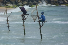Sri Lanka pêcheurs sur pieux