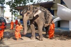 Sri Lanka éléphant