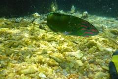 Thaïlande, île Koh Nang Yuan, plongée snorkeling, poissons et corail